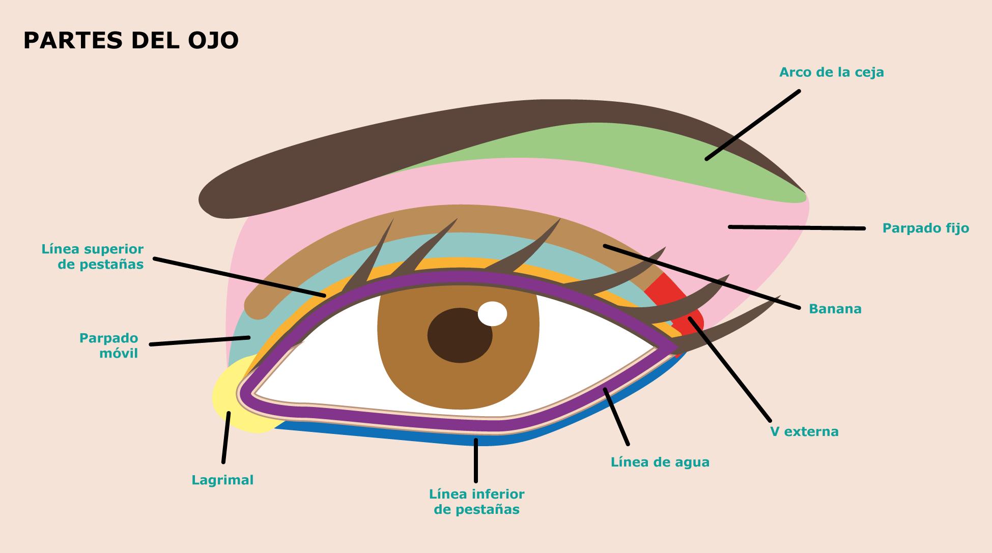 23-partes-del-ojo